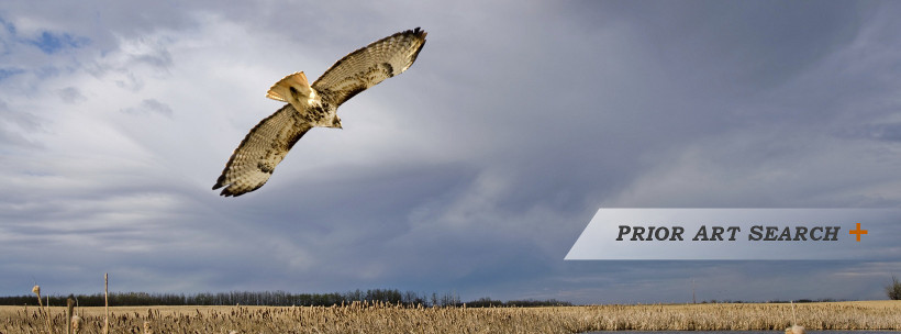 Hawk flying above a field